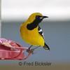 BIRDS 38