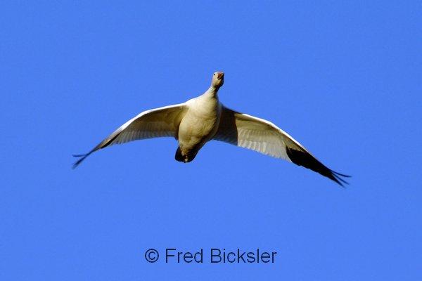BIRDS 12