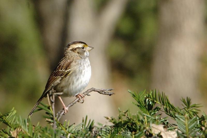 BIRDS 15