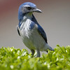 BIRDS 55