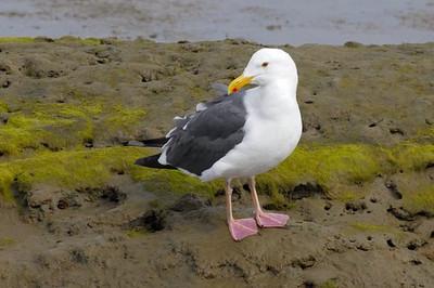 BIRDS 28