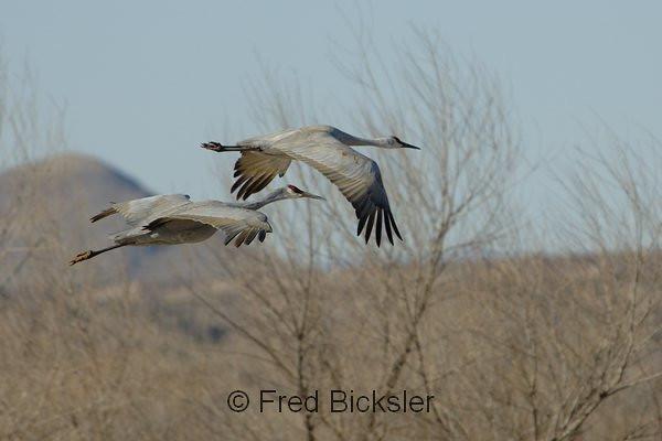 BIRDS 07