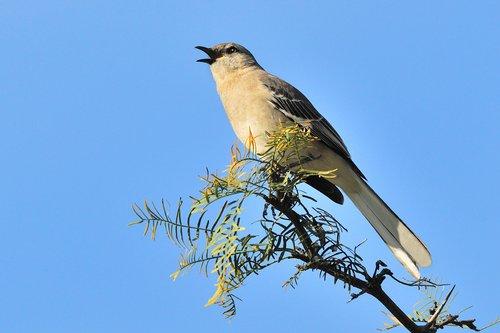 BIRDS 36