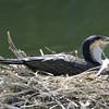 BIRDS 48