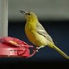 BIRDS 39