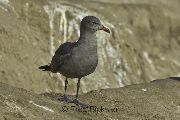 BIRDS 26