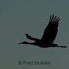 BIRDS 04