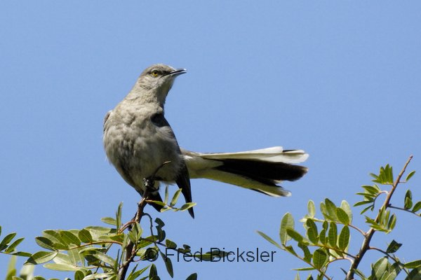 BIRDS 33