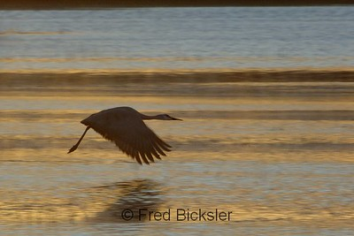 BIRDS 09