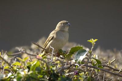 BIRDS 25<br /> In my back yard