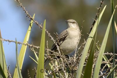 BIRDS 31