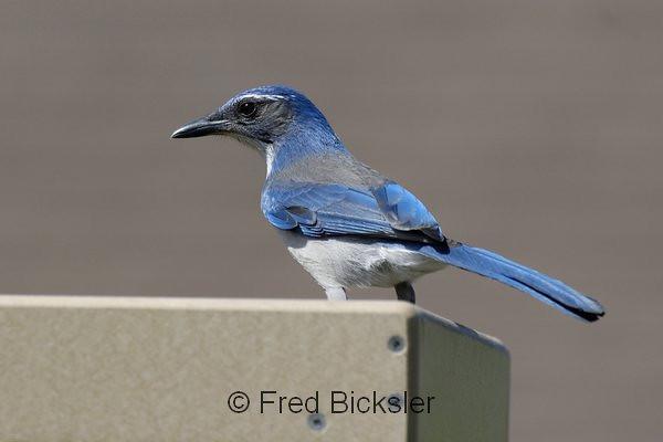BIRDS 53