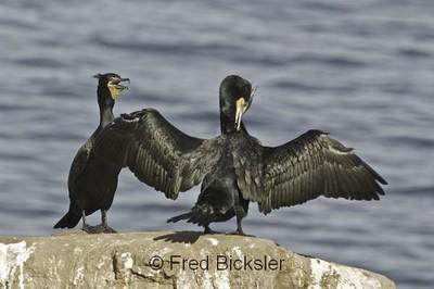 BIRDS 45