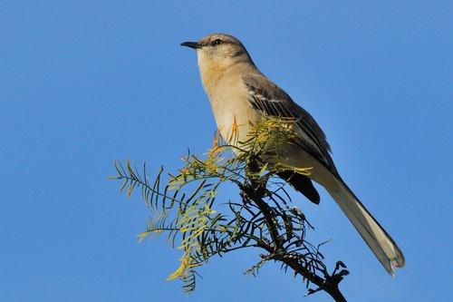 BIRDS 35