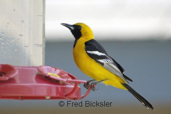 BIRDS 41