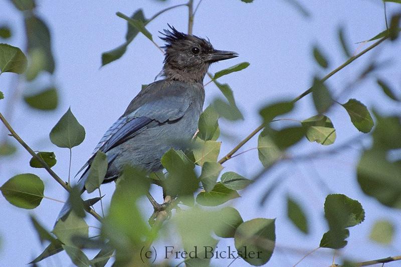BIRD 02