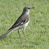 BIRDS 29