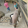 BISSELL Zoo Night :