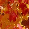 Leaves on Ramsay Street