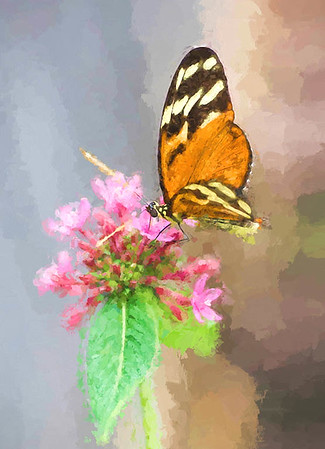 Monarch on Pink