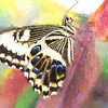 Swallowtail Abstraction