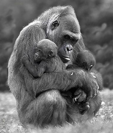 mom&twins