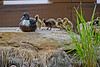 Birds BYU pond 11JY30-9
