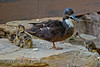 Birds BYU pond 11JY30-19