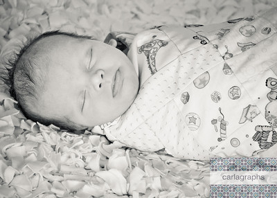 Swaddled in Quilt bw-