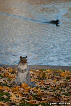 A Fat and Happy Squirrel