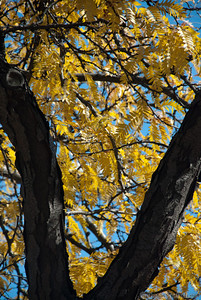 the leaves have turned yellow on this tree