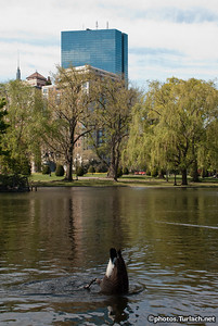 The Boston Public Gardens - 3