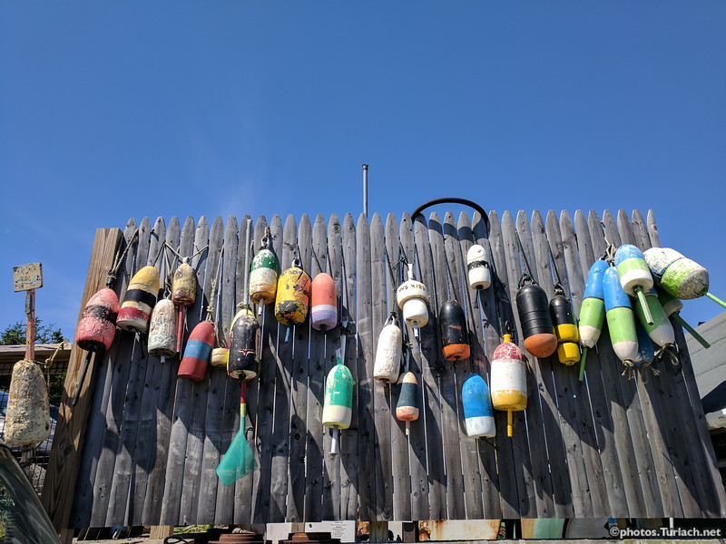 Old and Lost lobster buoys