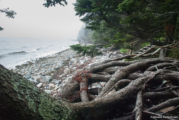 Roots and ocean