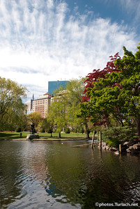 The Boston Public Gardens - 4