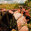 Tractor put out to pasture