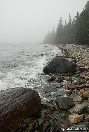 The shore at Bass Harbor