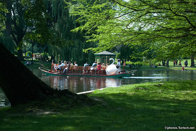Swan Boat in Boston Garden