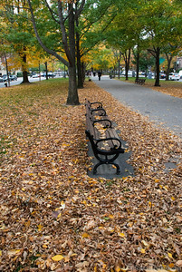 an empty park benches along Boston's Commonwealth Ave Mall sits surrounded by leaves.