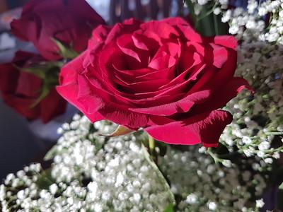 2017-03-20 Sara Bday Roses