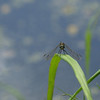 Dragonfly Background - 1024x768