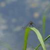 Dragonfly Background - 1024x768