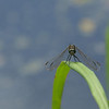 Dragonfly Background - 1366x768