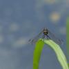 Dragonfly Background - 1920x1080