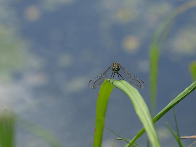 Dragonfly Background - Original Size - 4032x3024