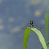 Dragonfly Background - 1440x900