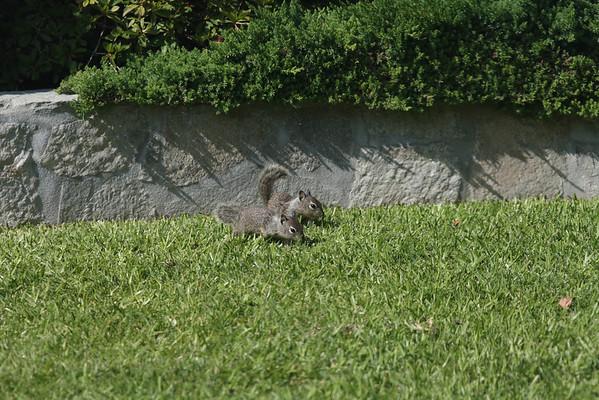 squirrels-1-2
