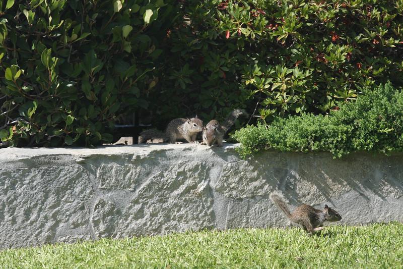 squirrels-1-3