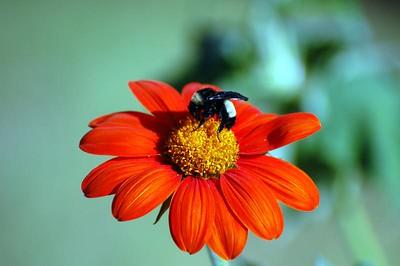 Bumble Bee!!