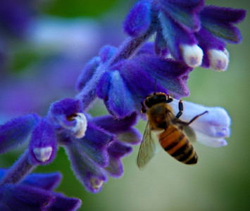Les Has Bees